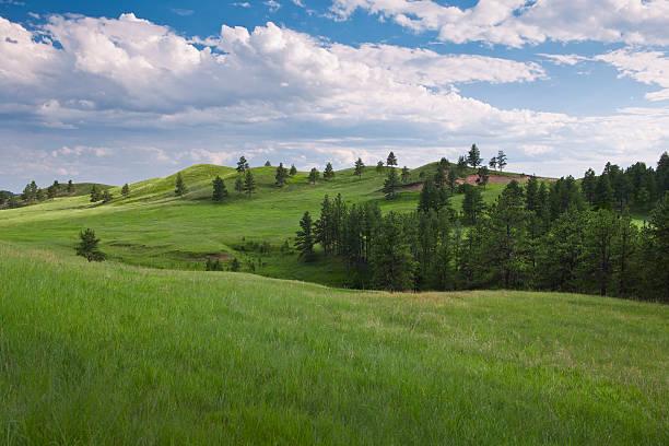 USA, South Dakota, Meadow in Custer State Park:スマホ壁紙(壁紙.com)