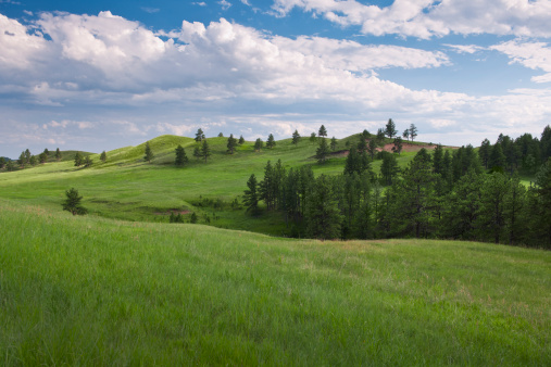草地「USA, South Dakota, Meadow in Custer State Park」:スマホ壁紙(1)
