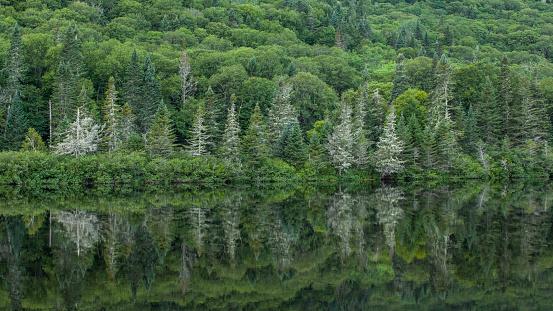 Boreal Forest「Jacques Cartier National Park」:スマホ壁紙(16)