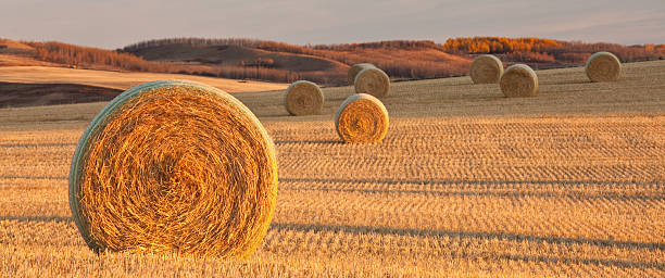 Panorama of Hay Bales on the Prairie in Fall:スマホ壁紙(壁紙.com)