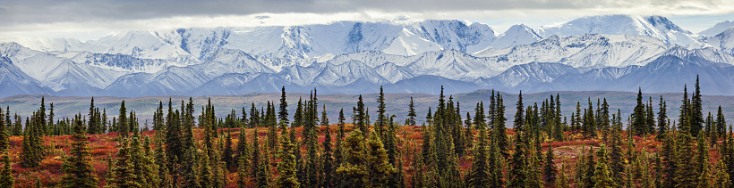 Alaska Range「Panorama of the taiga (boreal) forest and tundra near Wonder Lake in Denali National Park, Interior Alaska, with the snow-covered mountains of the Alaska Range near the base of Mt. McKinley in the background. Fall.」:スマホ壁紙(17)