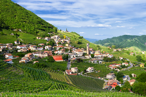 Grape「Panorama of Santo Stefano-Valdobbiadene (TV) land Prosecco vineyards in spring」:スマホ壁紙(5)