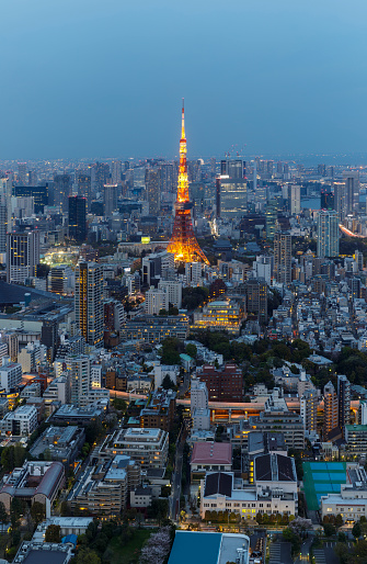 Minato Ward「Panorama of the skyscrapers of central Tokyo and the iconic Tokyo tower at night, Japan's capital city.」:スマホ壁紙(6)