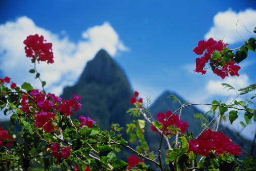 Gros Piton「St.Lucia, The Pitons, bougainvillea flowers in foreground」:スマホ壁紙(19)