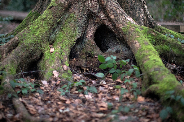 Tree「Views Of Moseley Bog Where JRR Tolkien Played As A Child」:写真・画像(13)[壁紙.com]