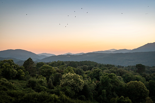 Horizon「View at sunset, Zonza, Corsica, France」:スマホ壁紙(17)