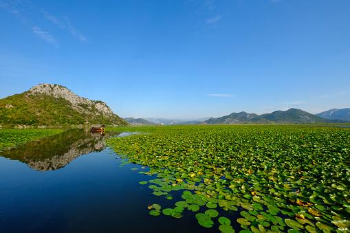 Water Lily「Montenegro, Cetinje province, water lilies on Lake Skadar」:スマホ壁紙(18)