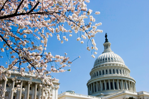 Cherry Blossoms「Capitol Dome and Cherry Blossoms」:スマホ壁紙(17)