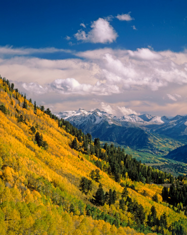 Aspen Tree「USA, Colorado, Uncompahgre National Forest, San Juan Mountains」:スマホ壁紙(16)