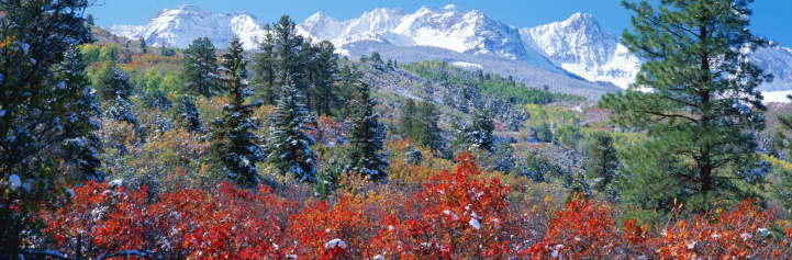 Uncompahgre National Forest「USA, Colorado, Uncompahgre National Forest, fall」:スマホ壁紙(5)