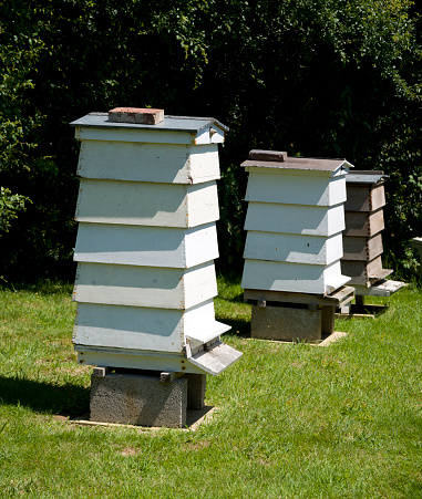 West Sussex「Bee Hives」:スマホ壁紙(14)