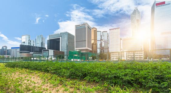 花壇「グリーンのオフィスブロックの香港」:スマホ壁紙(7)