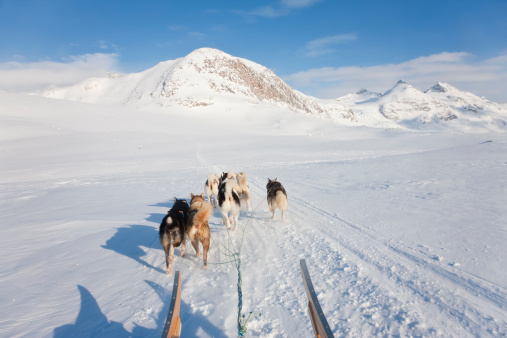 Dogsledding「Dog sledding in Eastern Greenland」:スマホ壁紙(15)