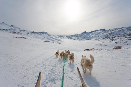 Dogsledding「Dog sledding, E. Greenland」:スマホ壁紙(6)