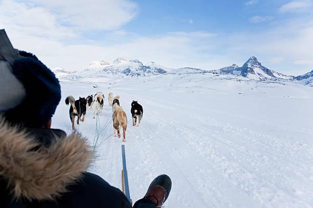 Dog sledding, E. Greenland:スマホ壁紙(壁紙.com)