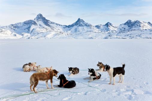 Dogsledding「Dog sledding, E. Greenland」:スマホ壁紙(4)