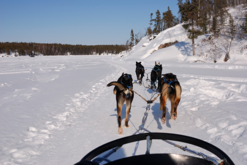 Sled「Dog sledding in the Arctic.」:スマホ壁紙(0)