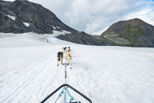 Dogsledding「dog sledding in alaska snow mountain, usa」:スマホ壁紙(19)