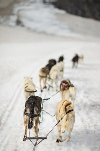 Dogsledding「dog sledding in alaska snow mountain, usa」:スマホ壁紙(5)