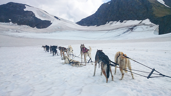 Dogsledding「dog sledding in alaska snow mountain, usa」:スマホ壁紙(13)