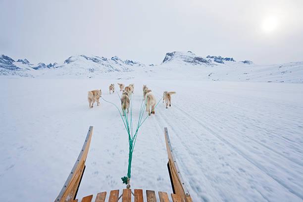 Dog sledding:スマホ壁紙(壁紙.com)