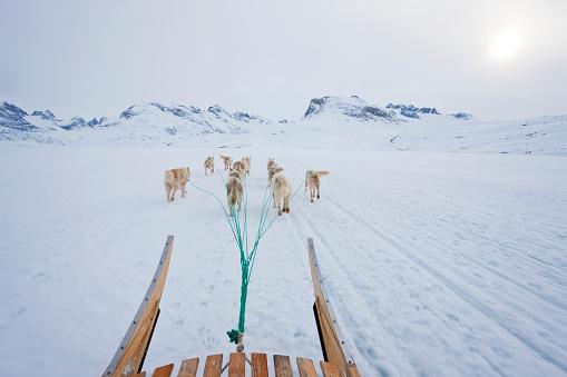 Dogsledding「Dog sledding」:スマホ壁紙(18)