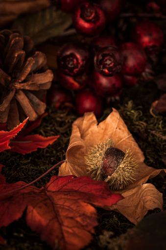 栗「秋の果物」:スマホ壁紙(13)