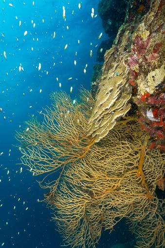 Soft Coral「Fragile underwater ecosystem coral reef biodiversity」:スマホ壁紙(7)