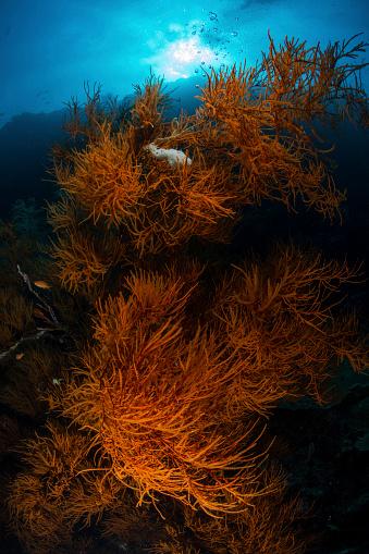 Green Turtle「Soft corals, Sipadan, Malaysia.」:スマホ壁紙(16)