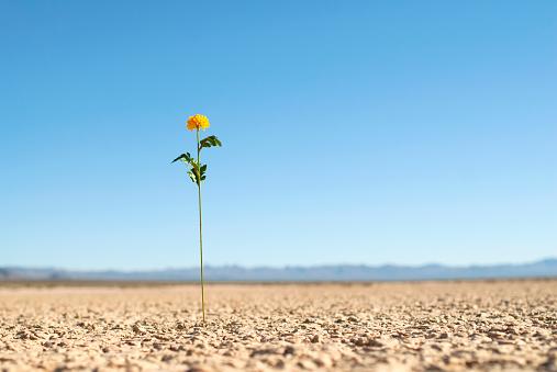 Lake Bed「Flower sprouting above dry lake bed.」:スマホ壁紙(12)