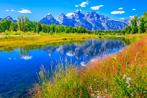 Aspen Tree「Grand Tetons mountains, wildflowers, summer, blue sky, water, Snake River」:スマホ壁紙(2)