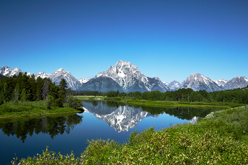 生い茂る「Grand Tetons from Oxbow Bend, Wyoming」:スマホ壁紙(8)