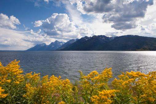 Eco Tourism「Grand Teton National Park,WY」:スマホ壁紙(15)