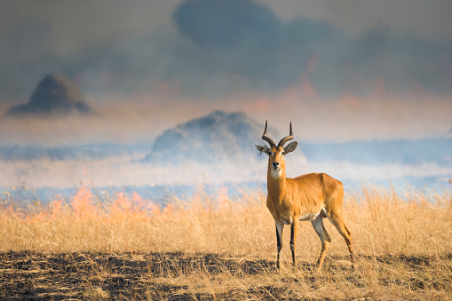 Queen Elizabeth National Park「Wild fire in Uganda」:スマホ壁紙(15)
