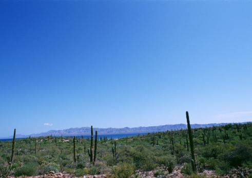 Baja California Peninsula「Cactus」:スマホ壁紙(13)