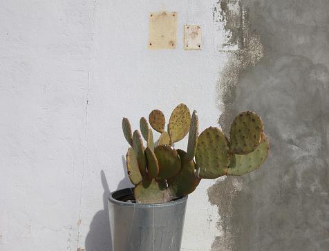 Decoration「Cactus」:スマホ壁紙(3)
