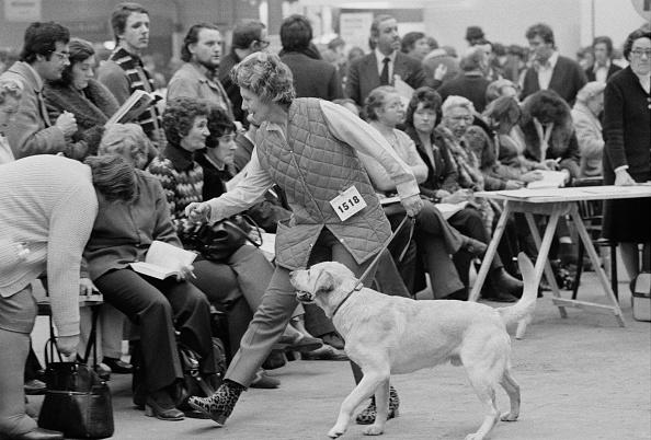 ヒューマンインタレスト「Crufts Dog Show」:写真・画像(3)[壁紙.com]