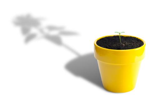 Hope - Concept「Plant Growth」:スマホ壁紙(18)