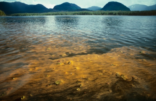 Shallow「Red tide bloom, dinoflagellates. Toxic. SE Alaska」:スマホ壁紙(14)