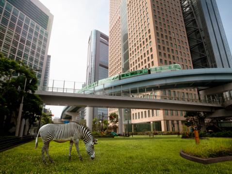 Zebra「Urban greening plan」:スマホ壁紙(15)