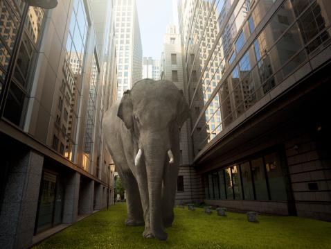 Animal Wildlife「Urban greening plan」:スマホ壁紙(0)