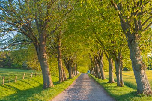 Avenue「Germany, Mecklenburg-Western Pomerania, Ruegen, Tree-lined path」:スマホ壁紙(18)