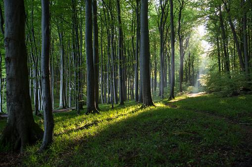 Nature Reserve「Germany, Mecklenburg-Western Pomerania, Ruegen, Jasmund National Park, Beech forest」:スマホ壁紙(4)