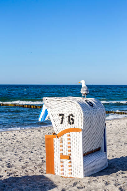 Germany, Mecklenburg-Western Pomerania, Baltic sea seaside resort Kuehlungsborn, hooded beach chair and seagull:スマホ壁紙(壁紙.com)