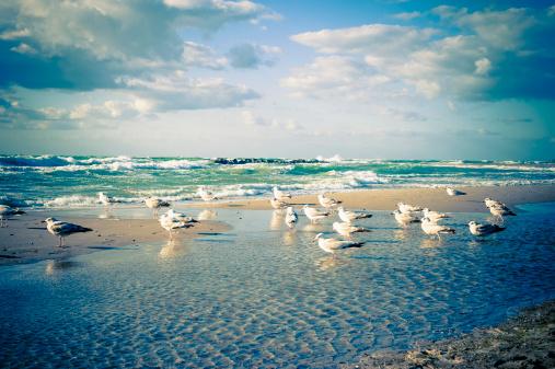 Seagull「Germany, Mecklenburg Western Pomerania, Seagulls perching at Baltic Sea」:スマホ壁紙(10)