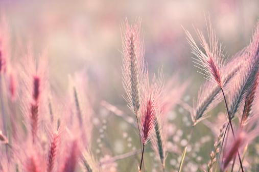 花畑「ワイルドフラワー背景」:スマホ壁紙(10)