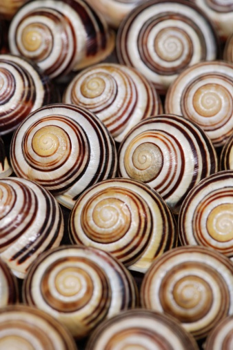 カタツムリ「Shells of snails」:スマホ壁紙(15)