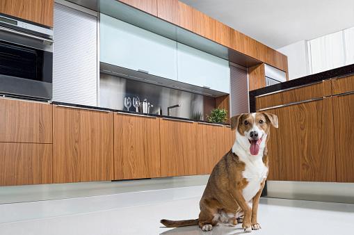 Miami「Dog panting on floor of modern kitchen」:スマホ壁紙(16)