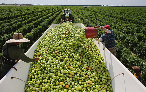 Joe Raedle「U.S. - Mexican Tomato Trade War Averted」:写真・画像(16)[壁紙.com]