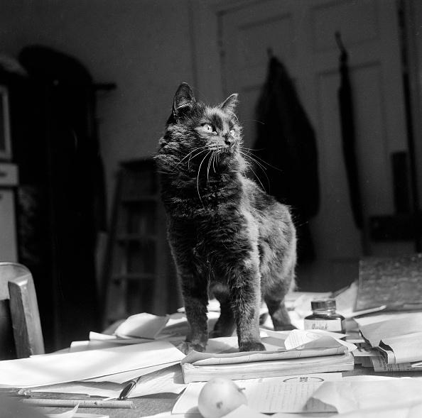 Black Color「Black Shorthair Cat Standing On Papers On A Desk」:写真・画像(16)[壁紙.com]